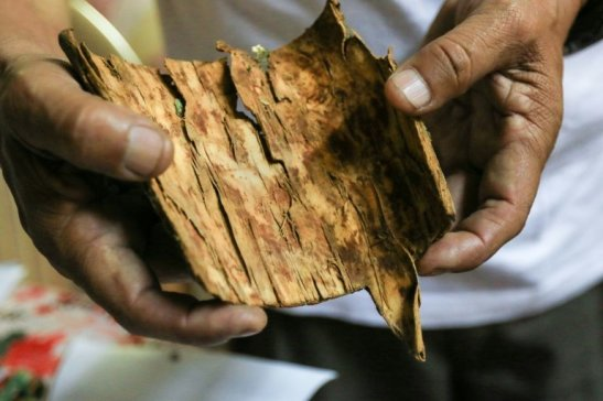 cinchona bark and peruvian researcher roque rodriguez